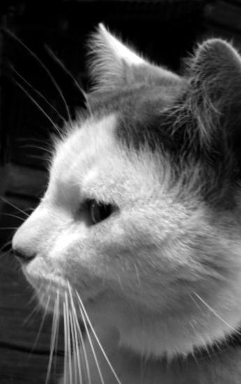 Filou en noir et blanc
